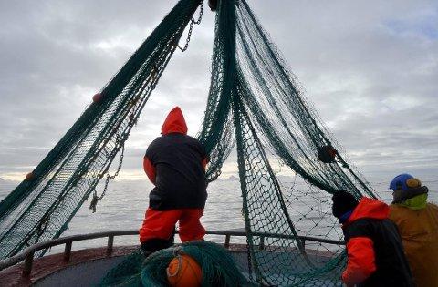 PRØVER: Mannskapet om bord på de fartøyene som blir valgt ut må ta prøver av egen fangst.