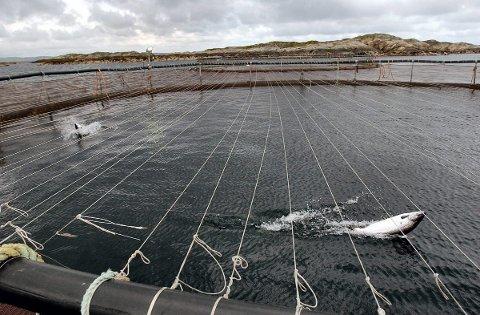 OPPDRETT: Fiskeridirektoratet slår fast at bunntilstanden under oppdrettsanlegg er god.