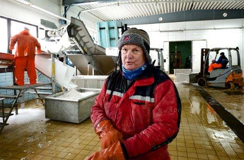 FULLT KJØR: På Skjervøy fisk og skalldyr går saltfiskproduksjonen som normalt. Mens ferskfiskbransjen sliter, konstaterer Roy Arne Pettersen at Nord-Troms bedriften i liten grad er rammet av krisen. Foto: Ola Solvang