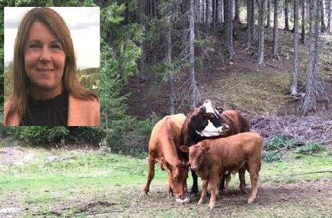 ANGREP: Kua i midten er den som Lena Anita Solberg Olsby gjenkjente som forfulgte henne. Den  samme kua skal ha stanget et eldre ektepar og skadet en kvinne stygt tidligere samme dag.
