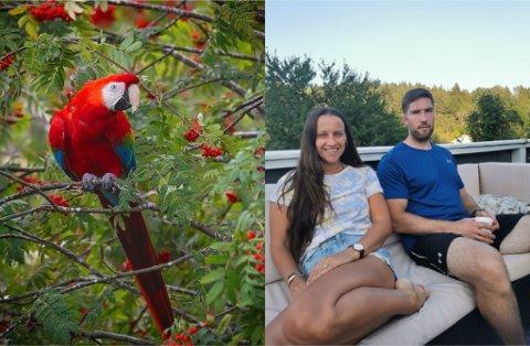 UVANLIG BESØK: Christine Underland (39) og Kristian Olsen (32) holdt på å sette frokosten i halsen når besøk fra Sør-Amerika kom flyvende forbi.