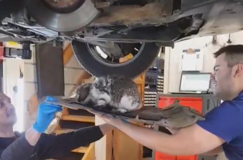 Et lite under: Her løfter mekanikerne Igor Dalic og Robin Lund Carrere kaninen ut av motorrommet på bilen.