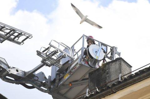 Brannvesenet tok i bruk stigebilen for å hjelpe fuglen i nød.