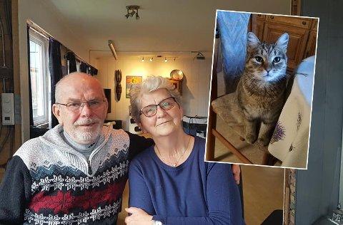5600 KILOMETER: Birgit og Hans-Günther Ahnert fra Tyskland kjørte 5600 for å hente hjem katten som forsvant på en ferietur i Gratangen i september. - Vi vil takke alle  som hjalp oss med å finne katten.