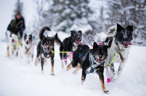 Klart for ny dyst for hunder og kjørere i fjellet. Dette bildet er fra Gausdal 5-mila  tredje juledag.