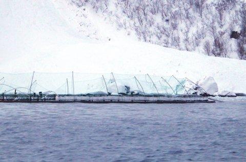 HER: Ett av Fiskeridirektoratets bilder fra området mandag.