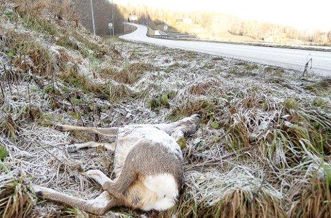 HJEMSØKT: Området rundt nedkjøringen til Snekkestad har vært hjemsøkt med mange rådyr-påkjørsler tidligere. Så langt i 2021 er det ikke registrert noen påkjørsler her.