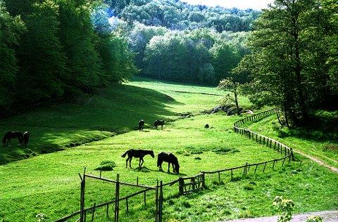 JORDFALLEN. Jordfalldalen har et usedvanlig rikt vekst- og fugleliv og er noe av en Edens hage for beitende hester og rådyr.