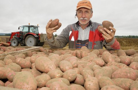 TOPP KVALITET: HAafdan Mælum og de andre potetbøndene i distriktet kan konstatere topp avlinger bådde i kvalitet og kvantitet.