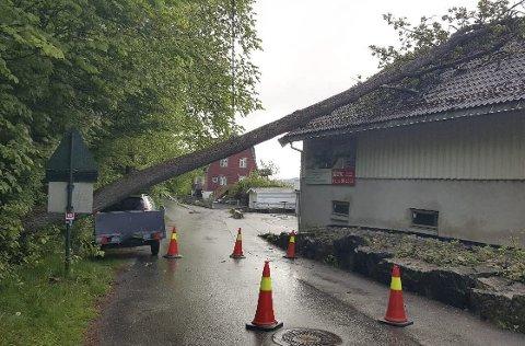 Dundret i taket: Det digre treet falt over og landet på taket av garasjeanlegget i boligsameiet i Bjørkegata i Brevik torsdag morgen. Heldigvis ble ingen mennesker skadet.