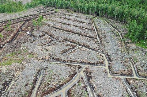 Grøftet: Slik ser det ut etter at et skogsområde i Østbygda er blitt grøftet. Dronefoto: Naturvernforbundet i Østfold