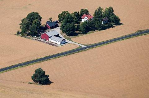 UNDER HALV AVLING: Gressavlingene på Østlandet falt i fjor med mer enn halvparten fra året før. Potetavlingen økte på sin side til tross i tørkesommeren.
