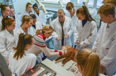 VETERINÆR: Smådyrsveterinær Borgen viste biologistudentene fram i anatomien. – På et rovdyr som reven kan vi ikke se alderen ut ifra tennene, som vi kan på en gresseter som en hest. Men tennene ser sunne ut på dyret, forklarte hun. Så fikk elevene skalpell og startet på den jobben de fleste synes var litt ekkel, og ikke luktfri.