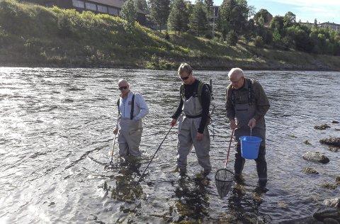 YNGELTELLING: Notodden jeger og fiskerforening har også i år foretatt yngeltelling i Tinnelva.