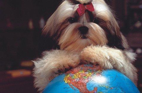 Alle dyr som skal være med til utlandet skal være ID-merket og ha helsesertifikat eller kjæledyrpass. Foto: Pressebilde/ANB