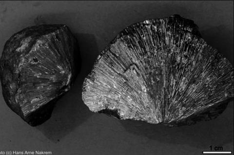Bryozoer (mosdyr) likner på koraller og var bittesmå encellede dyr som bodde i kolonier. Kan finnes mange steder langs veiene oppe i Granåsen og langs Randsfjordlinna fra Grymyr til Tingelsdad