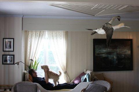 Ei utstoppet havsule henger ned fra taket i huset på Engeløya. Den ble funnet i fjæra mens den fortsatt så vidt var i live på en familietur sammen med ungene for mange år siden. Hugo Aasjord tar seg en liten pause sammen med Radna.