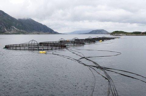 Seløy sjøfarm: Har fått ja fra Fylkeskommunen på utviding. foto: torild wika