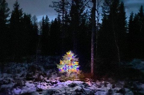 Mysterium: De opplyste trærne langs veien har blitt den store snakkisen i bygda i desember.