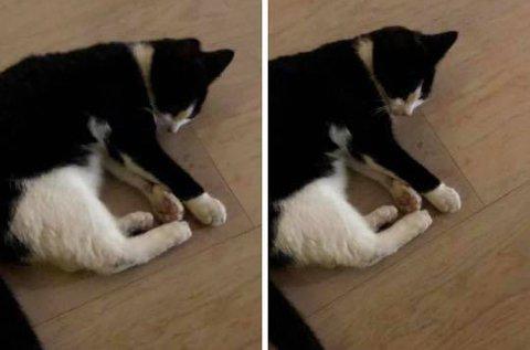 Denne katten ble funnet mandag. Dessverre måtte den avlives på grunn av skadene.