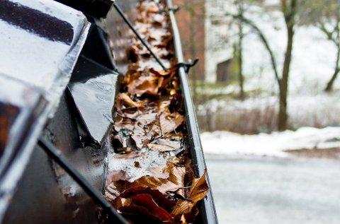 Ta en skikkelig rens av takrenna, så det ikke ligger løv og annet som kan tette igjen. Foto: Chera Westman, ifi.no/ANB
