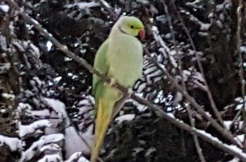 I SNØDREVET: Gunnar sett i snødrevet i Moss på lørdag.