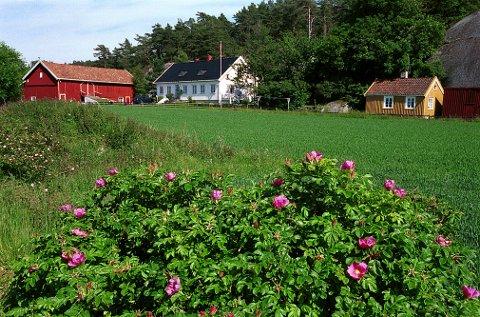 EFTANG. På Eftang søndre finner vi dette maleriske motivet: En pietetsfull restaurert gårdsbebyggelse i harmonisk samspill med det vestfoldske kystlandskap.