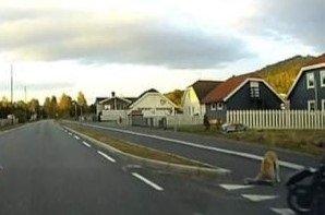 ANGREP: Hunden som gikk til angrep på en mindre puddel i Brumunddal siste uke, er nå avlivet.