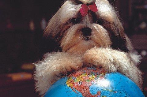 Alle dyr som skal være med til utlandet skal være ID-merket og ha helsesertifikat eller kjæledyrpass.