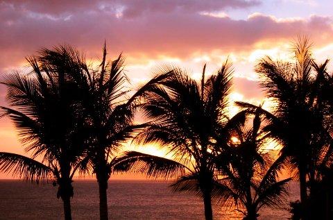 Lanzarote 20040127  Palmer i solnedgang. Ved havet. Syden. Sydentur. Sydenferie. Kveld.  Foto: Lise Åserud / SCANPIX (FRB)
