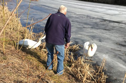 - NÅ BLIR DET VÅR: Arne og Unni Smith nyter våren med utsikt til Mellomdammen, og gleder seg stort over at svaneparet er tilbake.