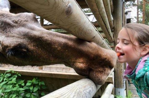Få deg et elgkyss i Bjørneparken i Flå, og se bjørnene før de går i hi. Gratis zipline og teater i høsterferien.