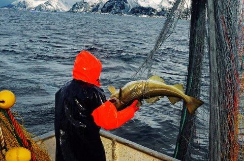 Fiskere hadde i 2016 i gjennomsnitt en månedslønn på 37.100 kroner. Det er 3.000 kroner mindre enn året før.