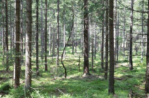 Tidligere måtte norske treforedlingsbedrifter importere for å få nok tømmer til sin virksomhet. I dag eksporteres enorme mengder flis ut av landet.