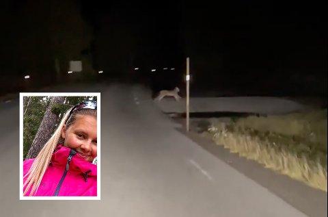 SPESIELT: Heidi Hovden (innfelt) fra Austbygde fikk øye på noe hun aldri hadde sett før da hun kjørte hjem sent onsdag kveld. Kjapp som hun er, snudde hun og bestemte seg for å filme – og da fikk hun blinkskuddet.