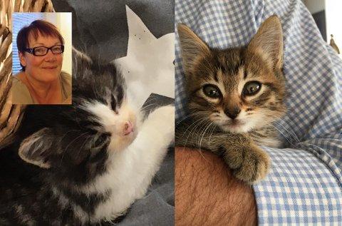 USYNLIG SYKDOM: Det er vanskelig å se at disse kattene lider av virus, men et til to døgn etter bildet ble tatt døde de.