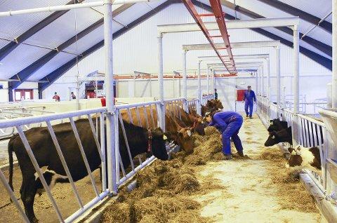 BÆREBJELKE: Fagskoletilbud i grovfôrbasert husdyrproduksjon blir nå en realitet på Storsteigen. Foto: Tonje Hovensjø Løkken