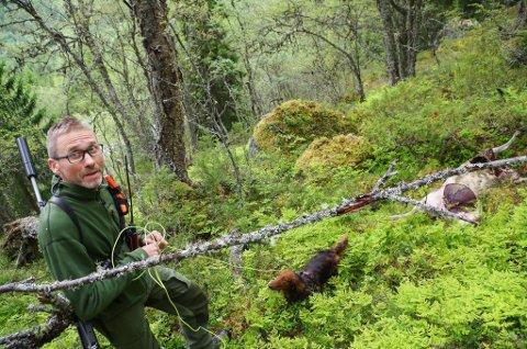FELLINGSLEDER: Jo Esten Trøan leder kommunale fellingsmannskaper, og håper på en egen forskrift for skadefelling av rovvilt. Her er han på oppdrag i Gammeldalen i Tynset i 2017.