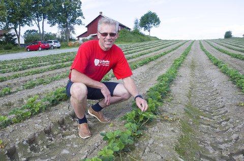 VENTER SPENT: - Jeg har hatt plukkehjelp fra Litauen i 20 år, sier Jordbærbonden  Per Fredrik Saxebøl. Han venter spent på myndighetenes tiltak når det gjelder å få utenlandsk plukkehjelp til landet