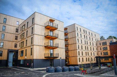 KRAV: Ås kommune har stilt en rekke krav til Studentsamskipnaden i Ås (SiÅs), som SiÅs foreløpig ikke har innfridd.