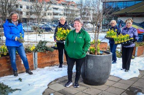 PLANTER PÅSKEFARGER I ÅS: Charlotte Karlsøen (midten) hos Mester Grønn fikk lov til å donere påskeliljer, som ellers ville ha blitt kastet. til Lions Ås/Eika. Lionsklubben plantet fredag ut påskeliljene i Lionslunden i Rådhusparken i Ås sentrum. F.v: Tone Molland, Tove Heen, Anne Hvattum og Unn Hegg.