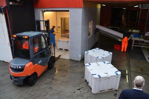 KAN KOMBINERES: Stolt Sea Farm Turbot Norway på Øye, som bruker spillvarme i forbindelse med piggvar-oppdrett er en næring som viser at industri og maritim næring kan kombineres.