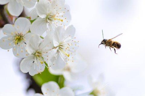 Insekt døyr ut 8 gongar raskare enn pattedyr, og i løpet av dei neste tiåra risikerer 40 prosent av verdas insektartar å verte utrydda. Det er særs alvorleg. Insekta er heilt essensielle for oss og alt anna liv på jorda.