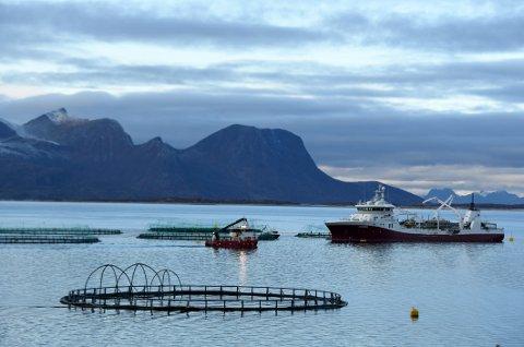 Enorme tap: Kystkommuner i Nordland som har stilt sjøarealer til disposisjon for oppdrettsnæringen, kan lide enorme tap de neste årene, mener Senterparti-topper.