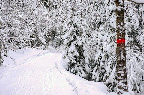 VINTER OG SNE: Men ingen skiløper som fyker av sted. Skiidyllen ser ut til å ryke denne vinteren, da Eiker gårdsysteri nekter kommunen å kjøre løyper, så lenge Eiker Ski har planer om stadion på Bermingrud.