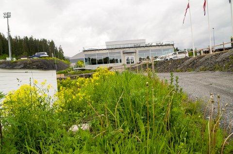 GROVÆR: Nedbøren den siste tiden har gjort underverker for gressets vilje til å gro, uten at det ser spesielt pent ut i Vikersund hoppsenter.