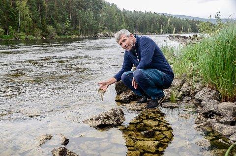 FORURENSET: Geir Øverby, leder Vikersund fiske, viser belegget med bakterier som legger seg på bunnen av elva og gjør at fisken er blitt borte.