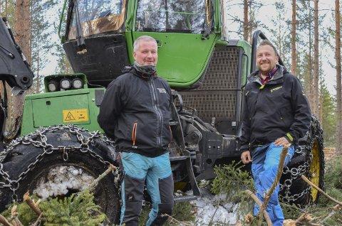 HØY AKTIVITET OG GOD PRIS: Bjørn Veien fra Vikersund driver firmaet Tynningsdrift AS  og har nok å gjøre, blant annet i skogen til Erik Nesthorne i Hokksund. Han hogger ut 30 prosent av skogen for å produsere kvalitet på det som står igjen.
