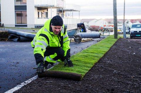 MILDT VÆR: Jarle L. Staff, anleggsgartner i Grøteig, har aldri før lagt gress så seint på året.