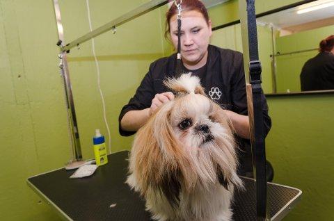 KLIPP: Katrine Landvik har tatt sin hundefrisørutdannelse i Sverige for å stå for hundestell i Storgata.